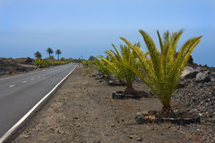 New road through volcanic landscape at La Palma. New road with palms through volcanic landscape at La Palma, Canary Islands royalty free stock images