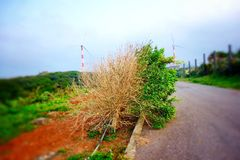 New scene. A poor tree, the windward side of the leaf were blown out Royalty Free Stock Photography