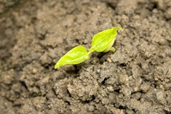 New seedling Stock Photos