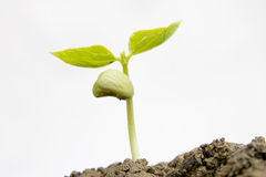 New seedling Stock Image