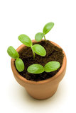 New Seedling in a Pot Overhead Shot Stock Photography