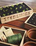 New Seedlings and string Royalty Free Stock Photos