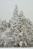 New Snow. A new snow season at Donner Summit Stock Photo