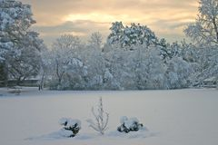 New Snow Royalty Free Stock Photos