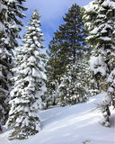 New Snow. A new snow season at Donner Summit Royalty Free Stock Image