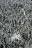 New snow on conifer forests Stock Photo