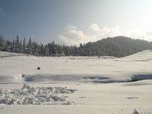 New snow from Gulmarg Kashmir India with pine tree Stock Photo