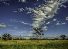 New South Wales Australien landskap Arkivbilder