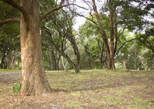 New South Wales forest Royalty Free Stock Photography