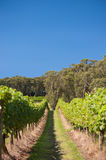 New South Wales Winery, Australia Stock Photo
