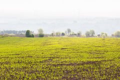 New sown field Royalty Free Stock Photos