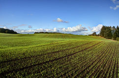 New-sown field Royalty Free Stock Images