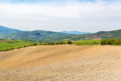 New sown field. In a rolling landscape Royalty Free Stock Images