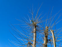 New spring branches cut tree Stock Images