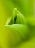 New Spring Growth With Selective Focus Royalty Free Stock Images