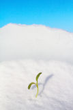 Winter outcome Royalty Free Stock Image