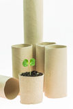 New sprout growing stock images
