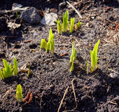New sprouts in springtime Stock Images