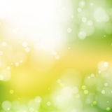 New Sunny abstract green nature background Royalty Free Stock Photo