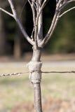 New tree Stock Photography