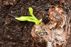 New tree branch germinate from trunk Stock Images