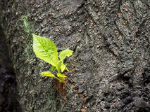 New tree branch. Green leaf Royalty Free Stock Photos