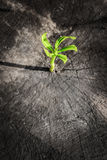New tree growth up on dead tree as business concept Royalty Free Stock Images
