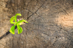 New tree growth up on dead tree Royalty Free Stock Image