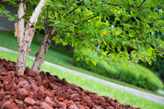 New tree landscaping Royalty Free Stock Photos