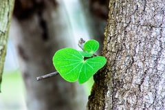 Tree leaf from old tree royalty free stock images