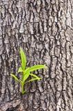 New tree life Stock Image