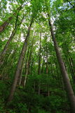 New Trees in Forest Stock Photography
