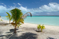 New tropical life Stock Photography