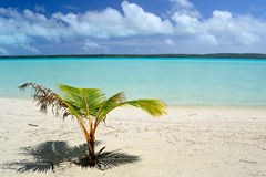 New tropical life Royalty Free Stock Photo