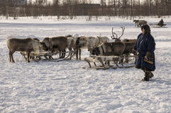 New Urengoy, YaNAO, North of Russia. March 1, 2016. The holiday of north nationality. Nenets man and north deer in winter day Stock Photography
