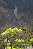 New vegetation Stock Photography