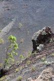 New vegetation Stock Photo
