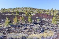 New Vegetation on a Volcanic Landscape Stock Photos