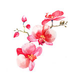 The new view of orchid watercolor hand drawn for postcard stock illustration