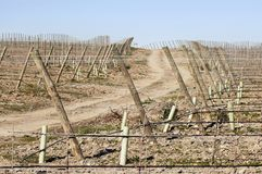 New Vineyard Stock Photos