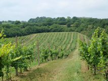 New vineyards. Historic monument in the background. South Moravia royalty free stock image
