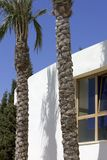 New, white building with palm trees and blue sky. New, white building with window, palm trees and sunny blue sky Royalty Free Stock Photo