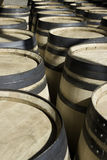 New wine new barrels stored in rows Stock Images