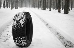New winter tire on fresh snow near forest. Space for text stock image