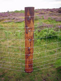 New wire netting fence. Recently erected wire netting fence on treated round posts with a background of heather Calluna vulgaris and bracken Pteridium aquilinum Royalty Free Stock Photo