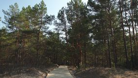 New wooden road leading from the beach of Baltic Sea gulf with white sand to the dune forest with pine trees stock footage
