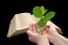 New world bible paradise Royalty Free Stock Images