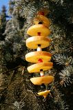 New-Year And Christmas-tree Decorations For Birds Royalty Free Stock Photo