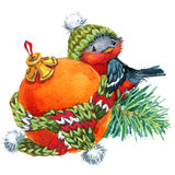 New year  background with winter elements and cute bird. watercolor Royalty Free Stock Image