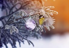 New year card with a beautiful bird tit on the Christmas tree wi stock image